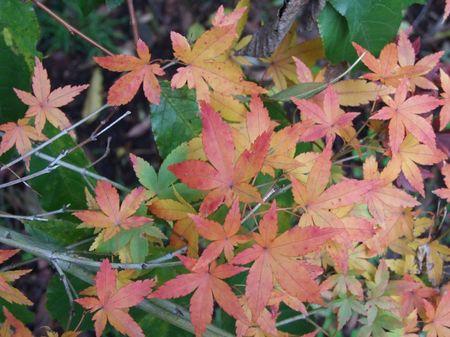 Autumn_may_08_002