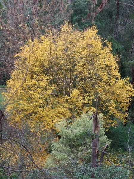 Autumn_may_08_007